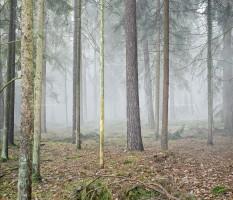 Gorleben, Castor, Demonstration, Wald, Nebel